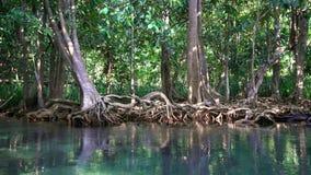 Szmaragdowy basenu i mangrowe lasu Pa Phru Tha Pom Khlong Pieśniowy Nam w Krabi prowinci, Tajlandia zbiory