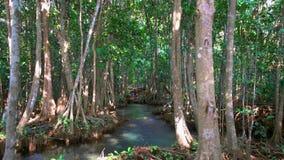 Szmaragdowy basenu i mangrowe lasu Pa Phru Tha Pom Khlong Pieśniowy Nam w Krabi prowinci, Tajlandia zdjęcie wideo