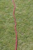 sznurek czerwony rolki sznurek Obraz Stock
