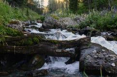 Szorstka halna rzeka Fotografia Royalty Free