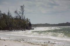 Szorstka kipiel na plaży przy Fortem De Soto, Floryda Obrazy Stock