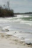 Szorstka kipiel na plaży przy Fortem De Soto, Floryda Zdjęcia Royalty Free