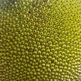 Szorstka zielona tekstura Zamyka up młody jackfruit, popularna azjatykcia owoc Obraz Royalty Free
