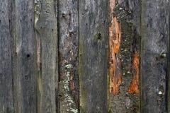 Szorstki drewniany ogrodzenie Obrazy Royalty Free