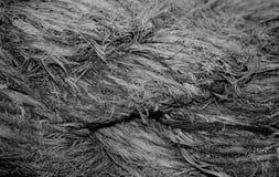 Szorstki wietrzejący kotwicowy linowy makro- tło Zdjęcia Royalty Free