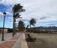 Szorstkie palmy zdjęcie stock