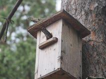 Szpaczek blisko birdhouse Sztuczny bird& x27; s gniazdeczko zdjęcia royalty free