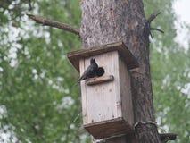 Szpaczek blisko birdhouse Sztuczny bird& x27; s gniazdeczko zdjęcie stock
