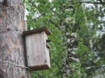 Szpaczek blisko birdhouse Sztuczny bird& x27; s gniazdeczko obrazy royalty free