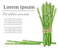 Szparagowa jarzynowa rośliny wiązka asparagus wywodzi się ilustrację z miejscem dla twój teksta dla dekoracyjnego plakatowego emb ilustracji