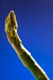 szparagowego zbliżenia świeża zieleń Fotografia Stock