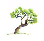 Szpotawa drzewna ręka rysujący wizerunek Zdjęcie Royalty Free