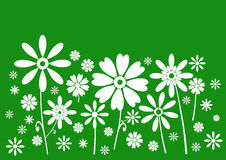 sztandarów kwiaty zielenieją biel Zdjęcie Royalty Free