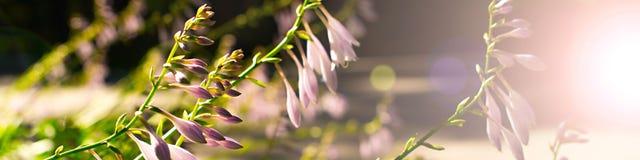 Sztandarów piękni kwiaty w zmierzchu Zdjęcia Royalty Free