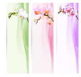 Sztandar, bookmarks z orchideami ilustracji