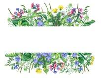 Sztandar z dzikimi łąka kwiatami, trawą odizolowywającymi na białym tle i, fotografia stock