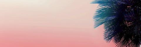 Sztandar z kopii przestrzenią w świetle - różowy kolor i drzewko palmowe zdjęcie royalty free