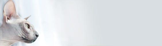 Sztandar z kotem - sieć chodnikowa szablon obraz stock