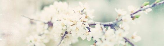 Sztandar z naturą kwitnie tło - sieć chodnikowa szablon Obraz Stock