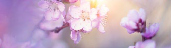 Sztandar z naturą kwitnie tło - sieć chodnikowa szablon Obrazy Stock