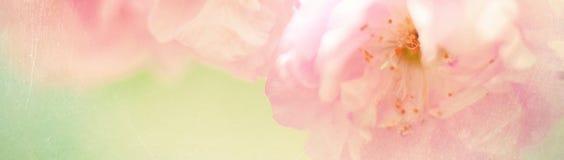 Sztandar z naturą kwitnie tło - sieć chodnikowa szablon Zdjęcie Stock