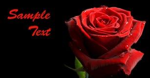 sztandaru czarny kropel czerwień wzrastał Fotografia Royalty Free