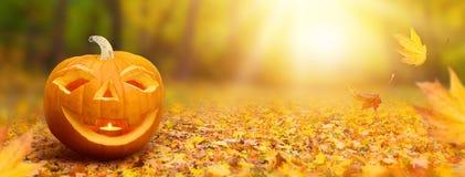 sztandaru Halloween miejsca teksta wektor twój Fotografia Stock