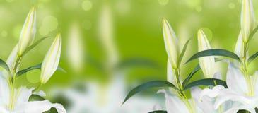 Sztandaru Naturalny bukiet leluje na zieleni zamazywał tło Zdjęcia Royalty Free