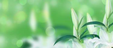 Sztandaru Naturalny bukiet leluje na zieleni zamazywał tło Obraz Stock