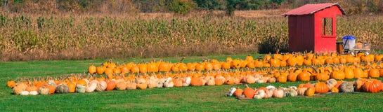 Sztandaru obrazek bani pole z kukurudzą Zdjęcia Royalty Free