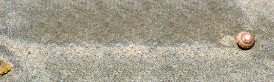 Sztandaru rozmiar, Piaskowata plaża z pięknymi skorupami na piasku zdjęcie royalty free