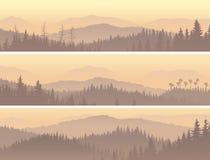 Sztandary dziki iglasty drewno w ranek mgle Obraz Royalty Free