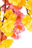 Sztuczna gałąź z kwiatami Obrazy Stock
