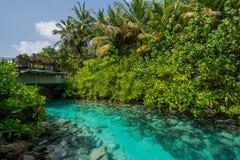 Sztuczna piękna rzeka z drewnianym mostem pośrodku tropikalne wyspy Zdjęcia Stock