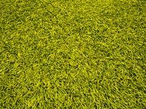 sztuczna śródpolna trawa Obrazy Royalty Free