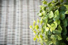 Sztuczna roślina na wickerwork tle Zdjęcia Stock