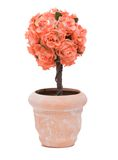 sztuczna roślina Obrazy Royalty Free