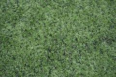 Sztuczna trawy tekstura na polu fotografia stock