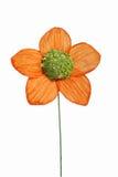sztuczne kwiaty Obrazy Royalty Free