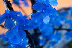 sztuczne kwiaty blues Obraz Royalty Free