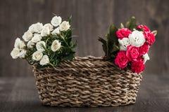 sztuczne kwiaty kolor Fotografia Stock