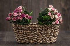 sztuczne kwiaty kolor Fotografia Royalty Free