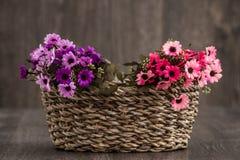 sztuczne kwiaty kolor Obraz Stock