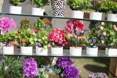 Sztuczne rośliny Zdjęcia Royalty Free
