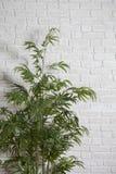 Sztuczne rośliny Zdjęcie Royalty Free