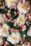 Sztucznego kwiatu ściana w pracownianej fotografii Zdjęcia Stock