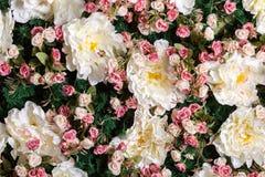 Sztucznego kwiatu ściana w pracownianej fotografii Fotografia Royalty Free