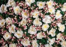 Sztucznego kwiatu ściana w pracownianej fotografii Zdjęcie Royalty Free