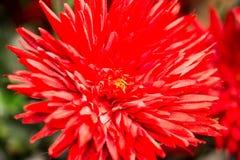 sztucznego kwiatu czerwień Obraz Royalty Free