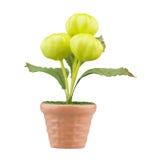 sztucznego kwiatu waza Obraz Royalty Free